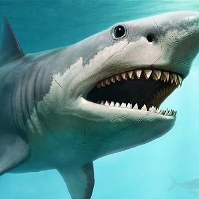 Beyond the Shark Tank - PR and media for startups